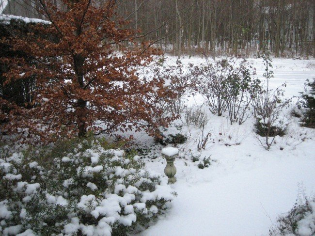 Snow insulates plants but wind can be brutal. (Garden Making photo)