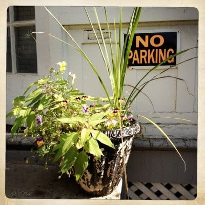 My front stoop container, a little worse for wear after a long, hot summer.