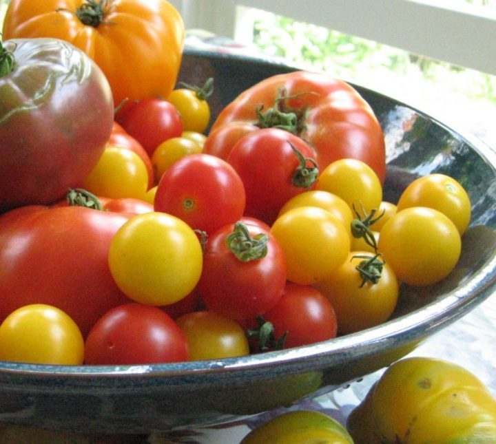 As temperatures drop, tomatoes need extra care (Garden Making photo)
