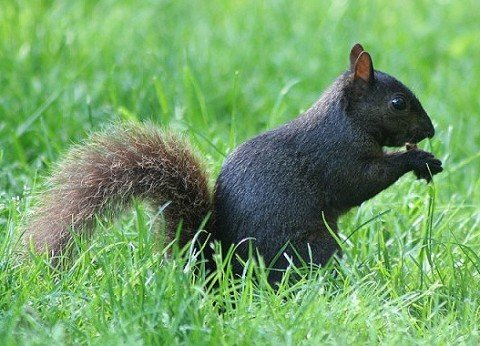 It's worth trying to outsmart squirrels when you're planting bulbs in the fall. (Photo by Brendan Zwelling)