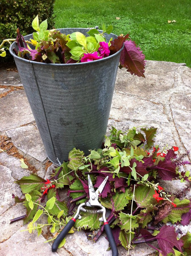 Chopped-up annuals, ready to be composted. (Garden Making photo)