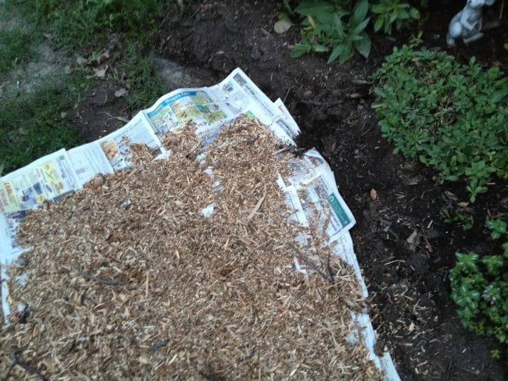 Newspaper laid under the mulch will help prevent weeds from sprouting in the front path at Jason's and Heather's garden.