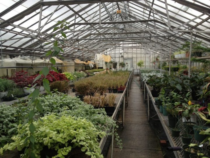 One of many greenhouses at Centennial Park in Toronto, devoted to growing plants that will be distributed in the gardens and containers across the city.
