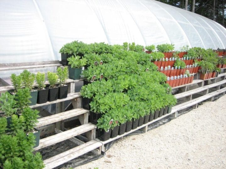 Perennials, shrubs and trees are on sale at most nurseries in the fall.