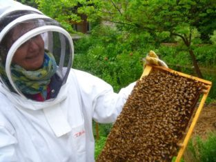 Lorraine Flanigan bravely handles a tray of bees.