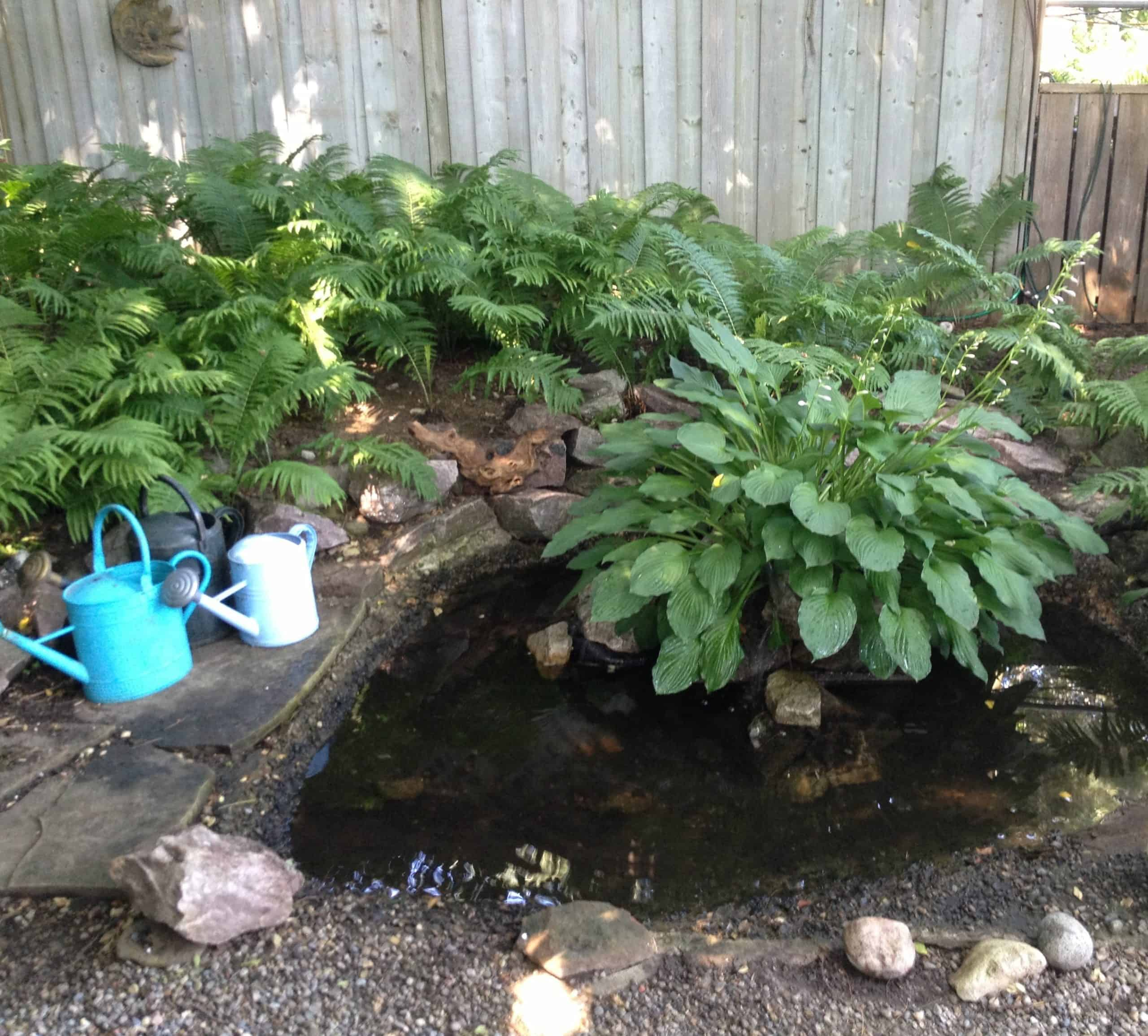 I liked this pond, with a hosta growing in the middle.