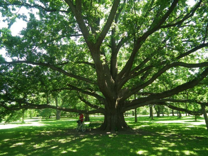 Many of the trees in the Dominion Arboretum were planted in the early 20th century.