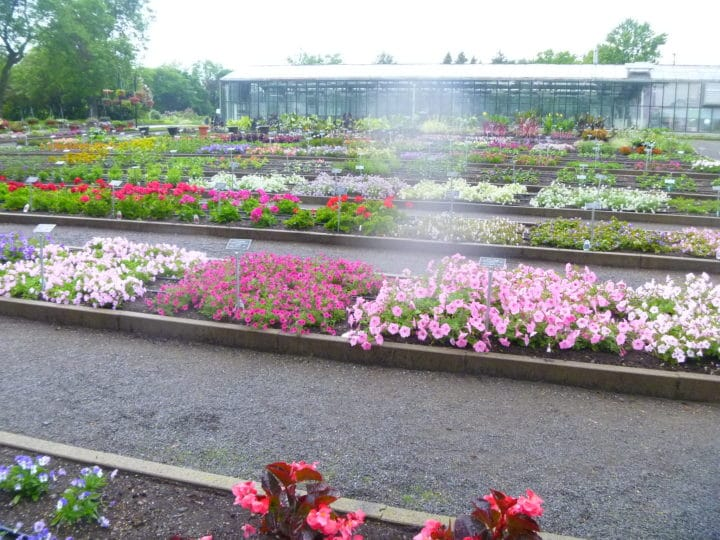 New plants are displayed in the Demonstration Beds