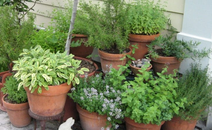 Mulching helps to sun-proof containers in full sun. (Garden Making photo)