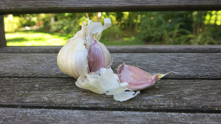 Plant garlic cloves in fall. (Garden Making photo)