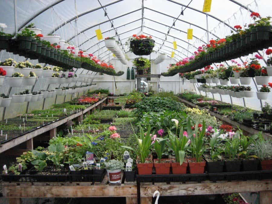 When shopping for plants, choose healthy, well-grown specimens. (Garden Making photo)