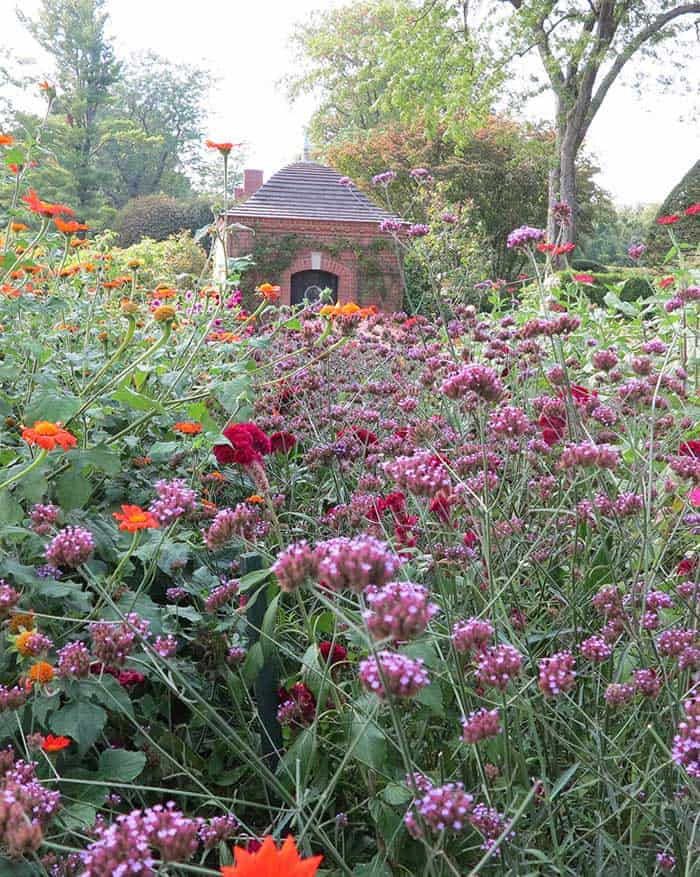 Saturated colours of orange, purple and red give a rich look to a flower bed in one section of the broad cutting beds at Wethersfield Garden in Amenia, N.Y. (Garden Making photo)