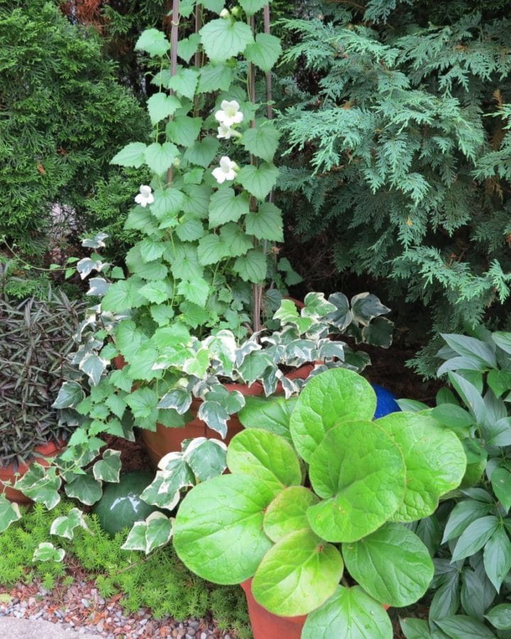 A selection of foliage plants with contrasting textures and shapes adds interest to a shady corner.