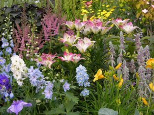 A perennial border filled with delphiniums, astilbes, lilies, daylilies and lamb's ears. (Photo by Joanne Young)