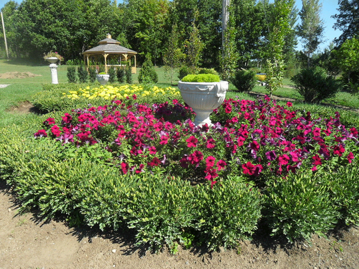 The formal knot garden is one of 25 gardens at Quinte Botanical Gardens.