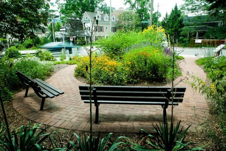 Native plants comprise the Anderson Parkette Biodiversity Garden, which is designed to attract different species of life.