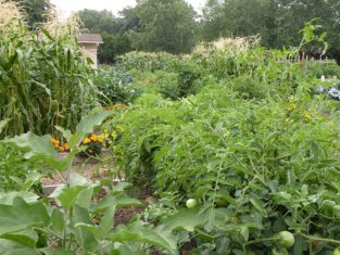 Growing a variety of edibles is one of the many joys of gardening. (Photo by Joanne Young)