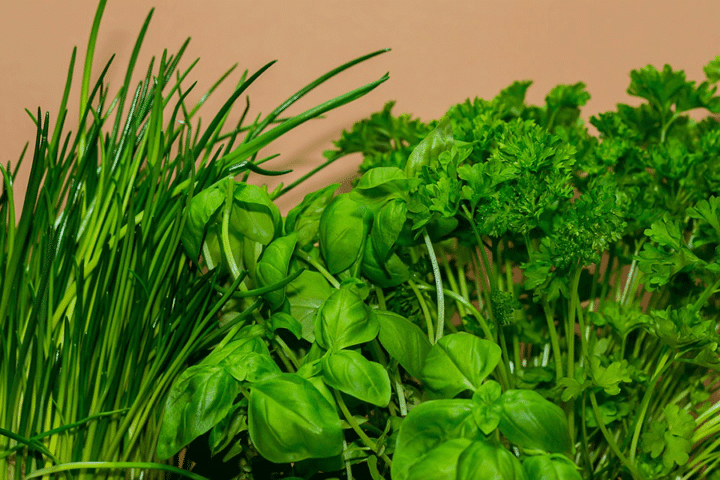 Chives, basil and parsley (Photo by Pixabay)