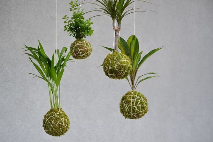 A collection of Japanese string art, also known as kokedama. (Photo by Wikimedia)