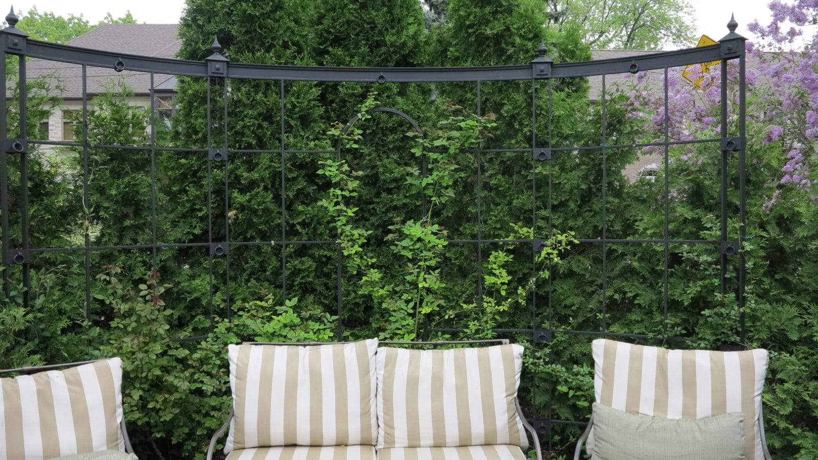An example of cedars used to screen a seating area, accented with an attractive metal trellis.