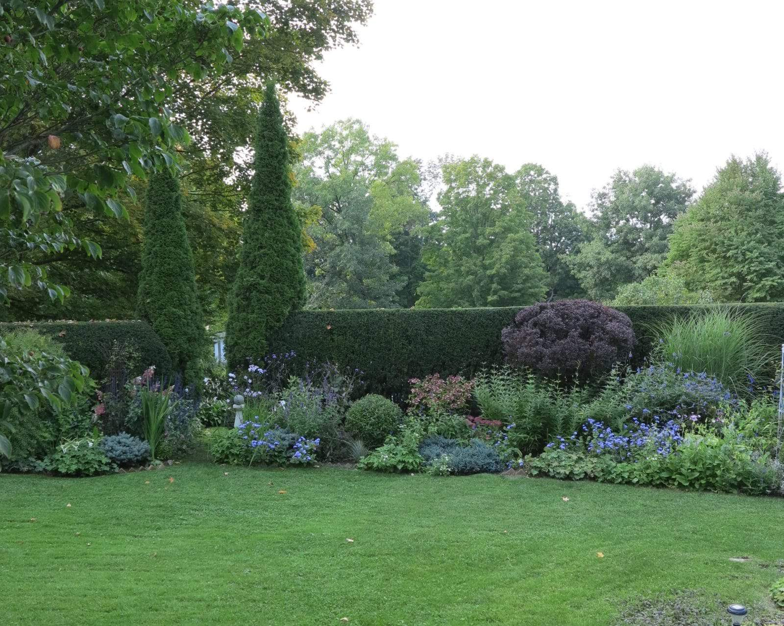 Two tall cedars act as punctuation in this large garden, and also signal where the entrance is to the vegetable garden on the other side of the hedge.