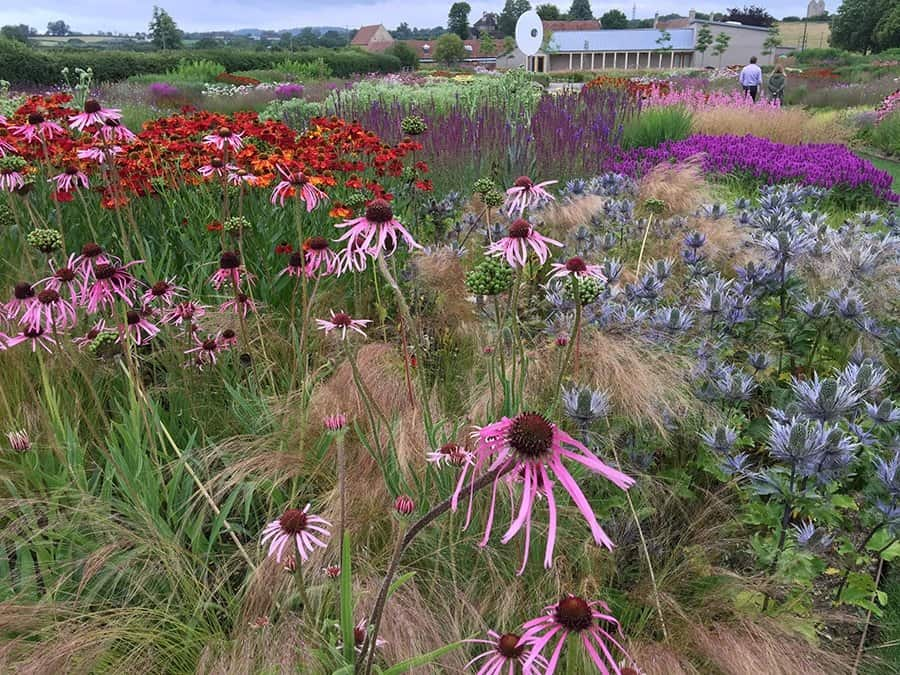 A summer view of the Somerset garden in England (Photo by Piet Oudolf)