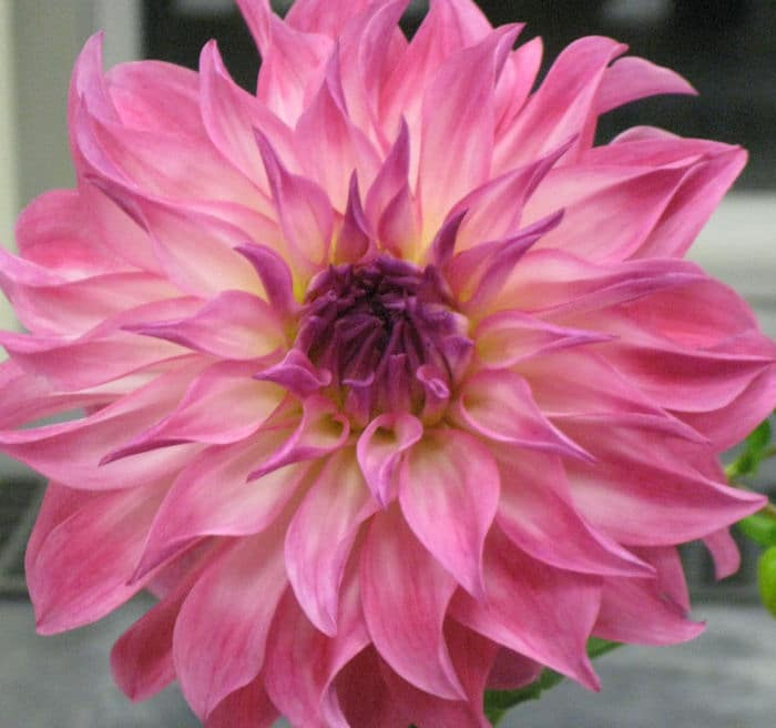 What's New at the Guelph Test Gardens