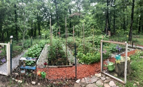 Where: Pottersville, ON   When: June 2019   What: My parents little garden in the forest.   Photo: Yuliya C.