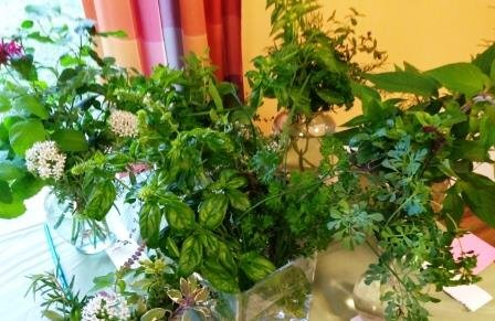 Free speaker about herbs and Flower Show