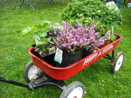 Waterloo Gardeners May Monthly Meeting, Annual Plant Auction