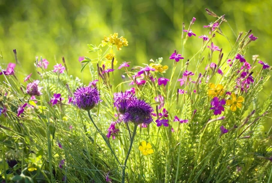 Going Native: Incorporating Wildflowers & Native Plants into Your Garden