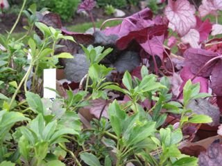 Plant and Compost Sale
