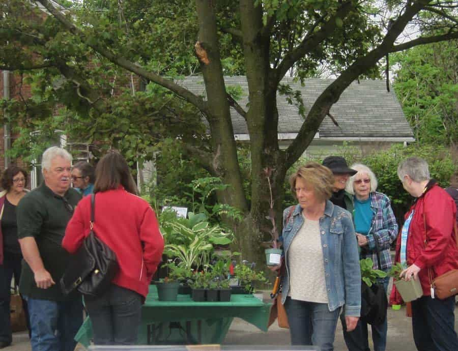 Plant Sale in Picton