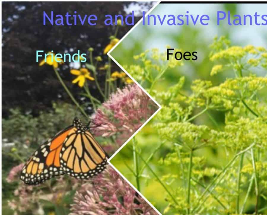 Ontario Native and Invasive Plants: Friends or Foes
