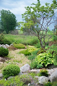 Feng Shui for Harmony in the Home and Garden