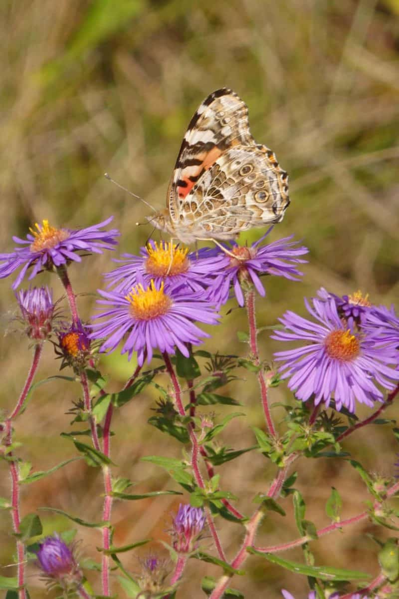 Weed & Wildflowers: Noxious, Poisonous & Invasive