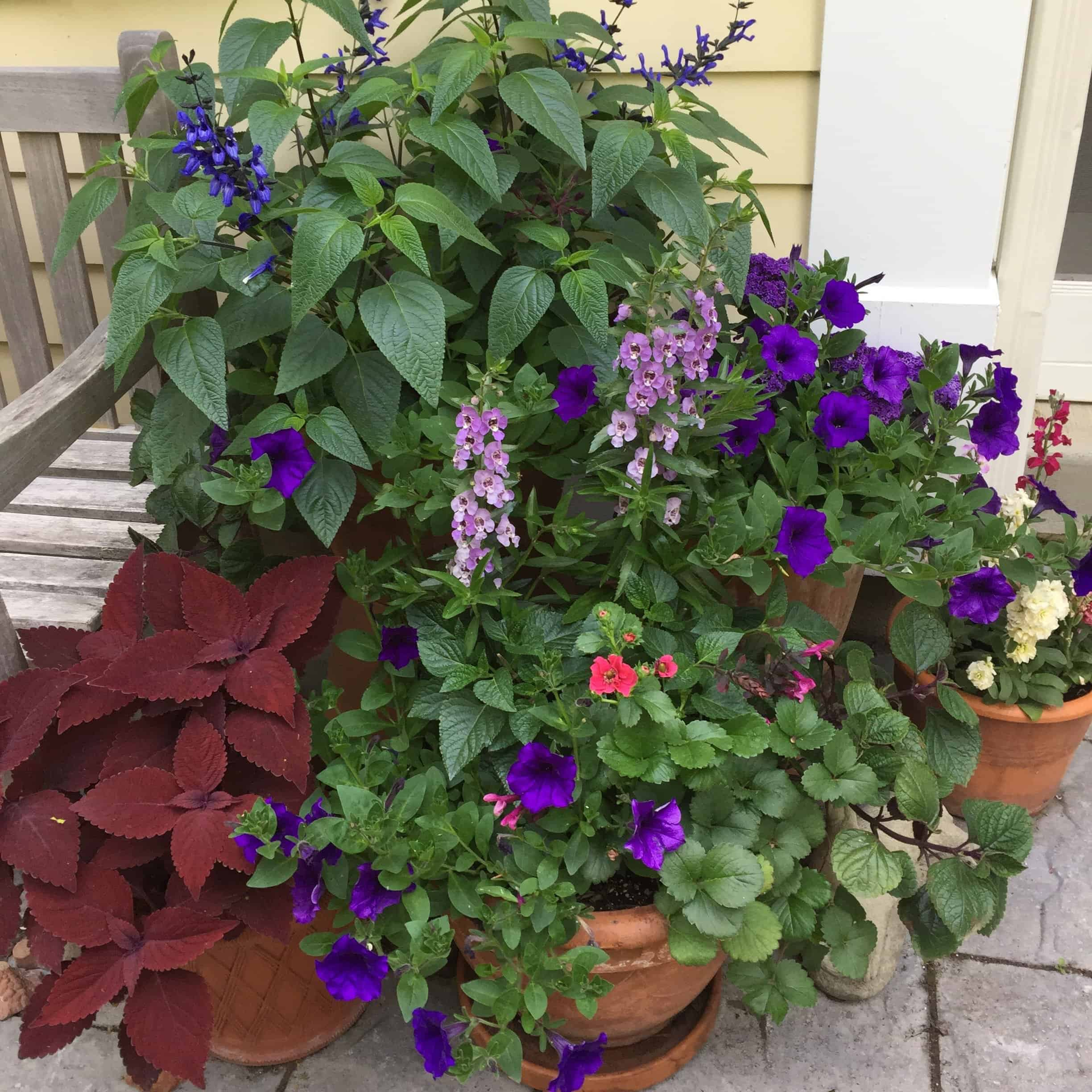 Winter is a good time to look at photos from last year to see what plants worked well in containers.