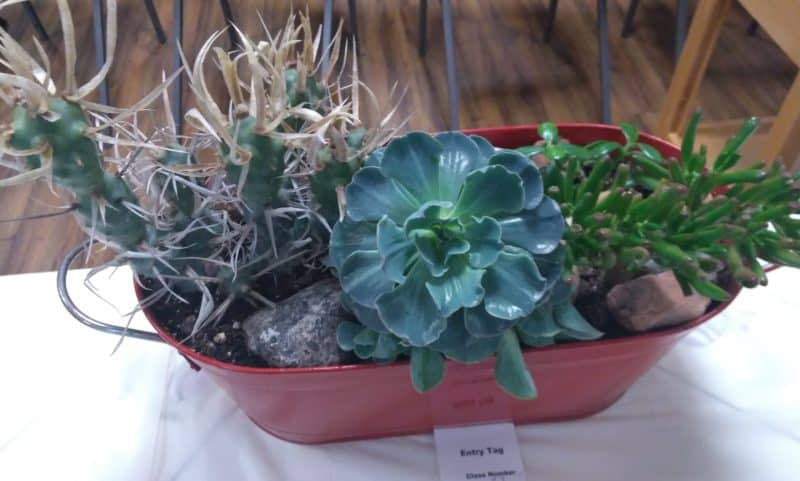 April Houseplant show and Kathy Harper of Lee Valley