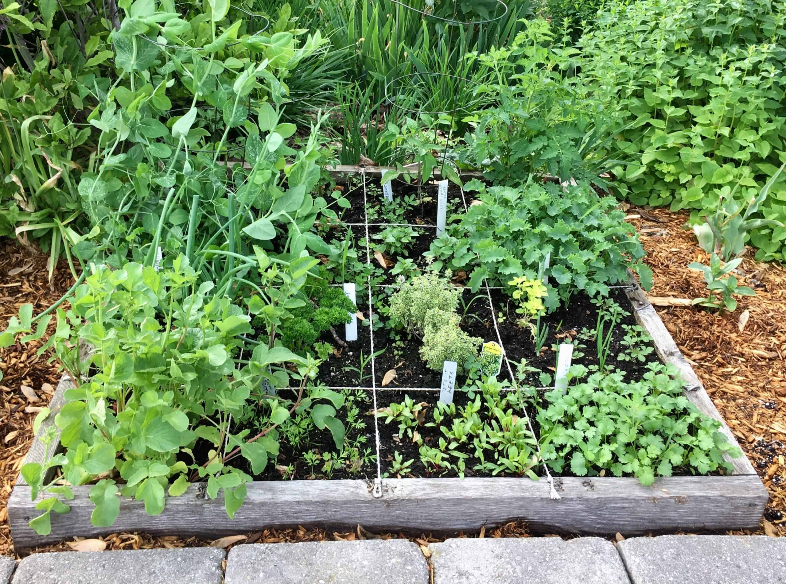 Climate change, Organic Gardening and more