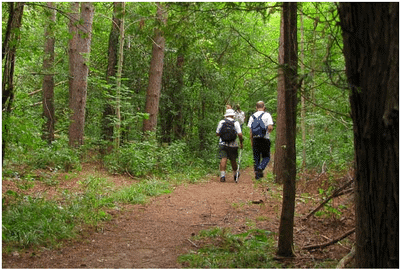 CANCELLED: Tour of St. Ignatius Old Growth Forest Project