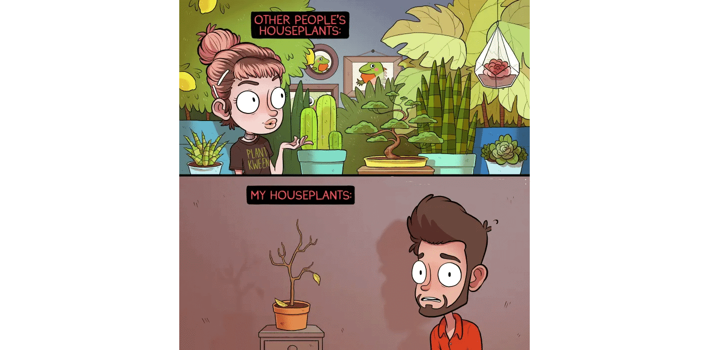 A Humourous Look at How Not to Kill Your Houseplants