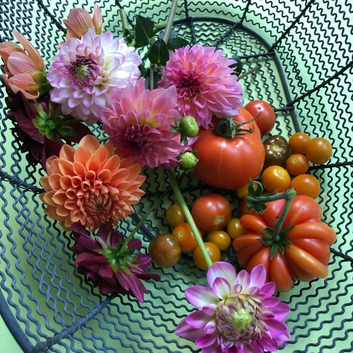 flowers and tomatoes
