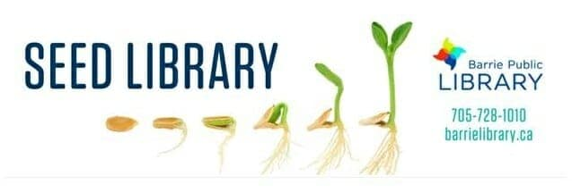 Barrie Seedy Saturdays at the library