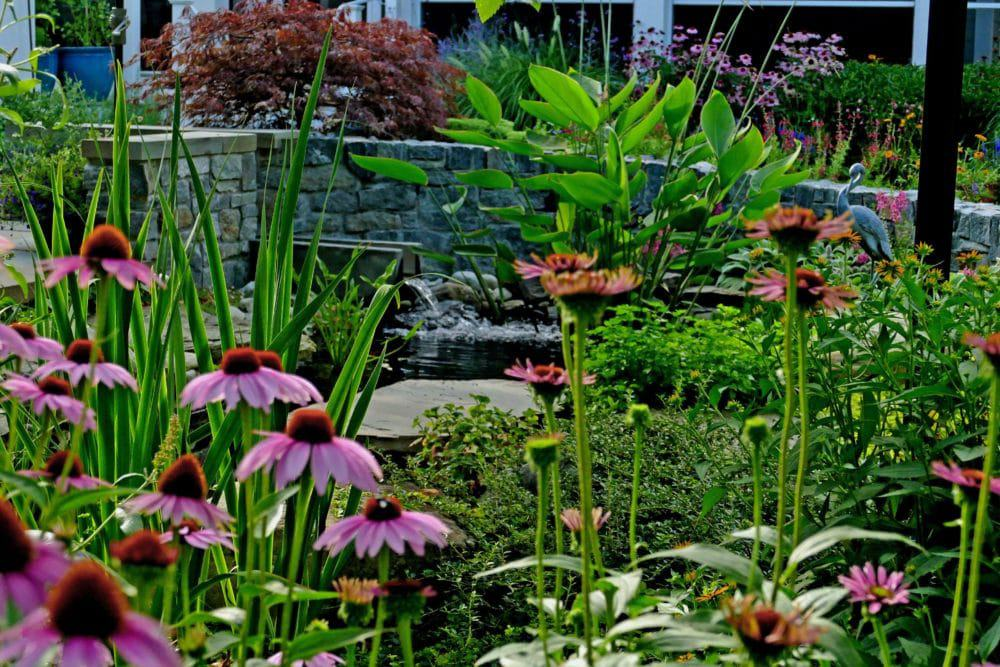 Where: Lewes, Delaware | When: July 2019 | What: For a fairly new garden, 4 years young on 3/4 acre, it looks mature and includes Koi pond, pollinators, perennials, vegetables and herbs. | Photo: Morty B.
