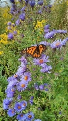 monarch.whitby-reader-photo