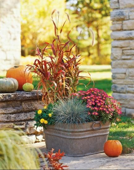 Plants for a Fabulous Fall