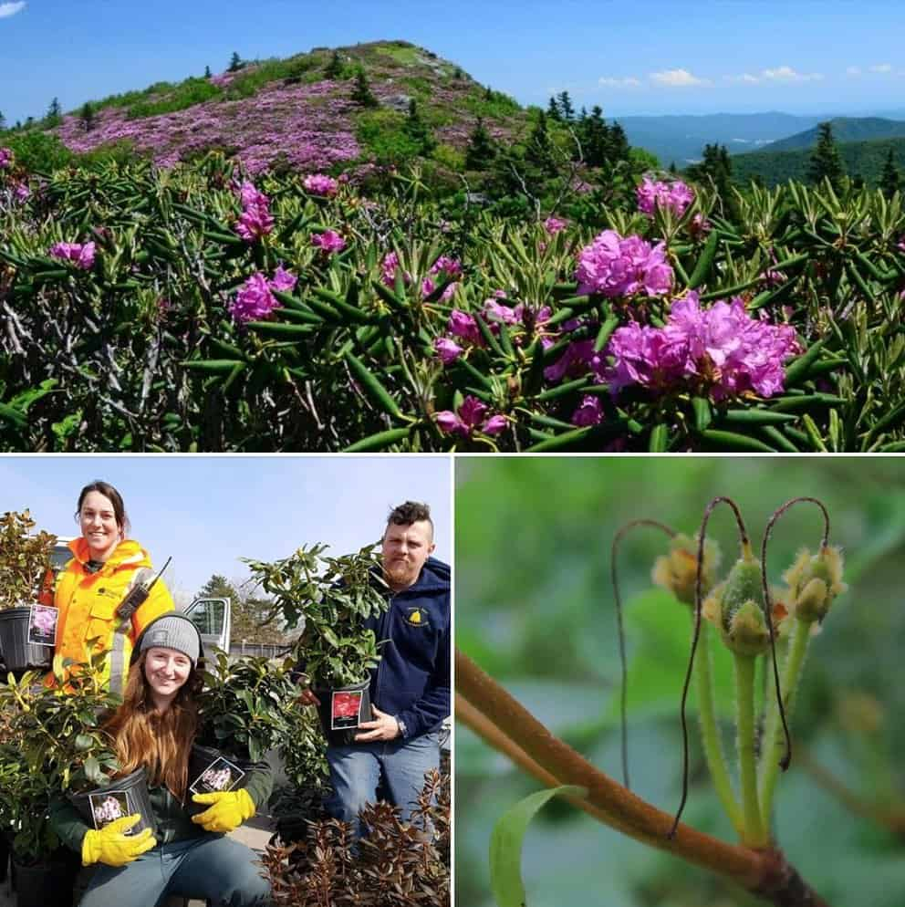 Rhododendron through your lens: photo competition