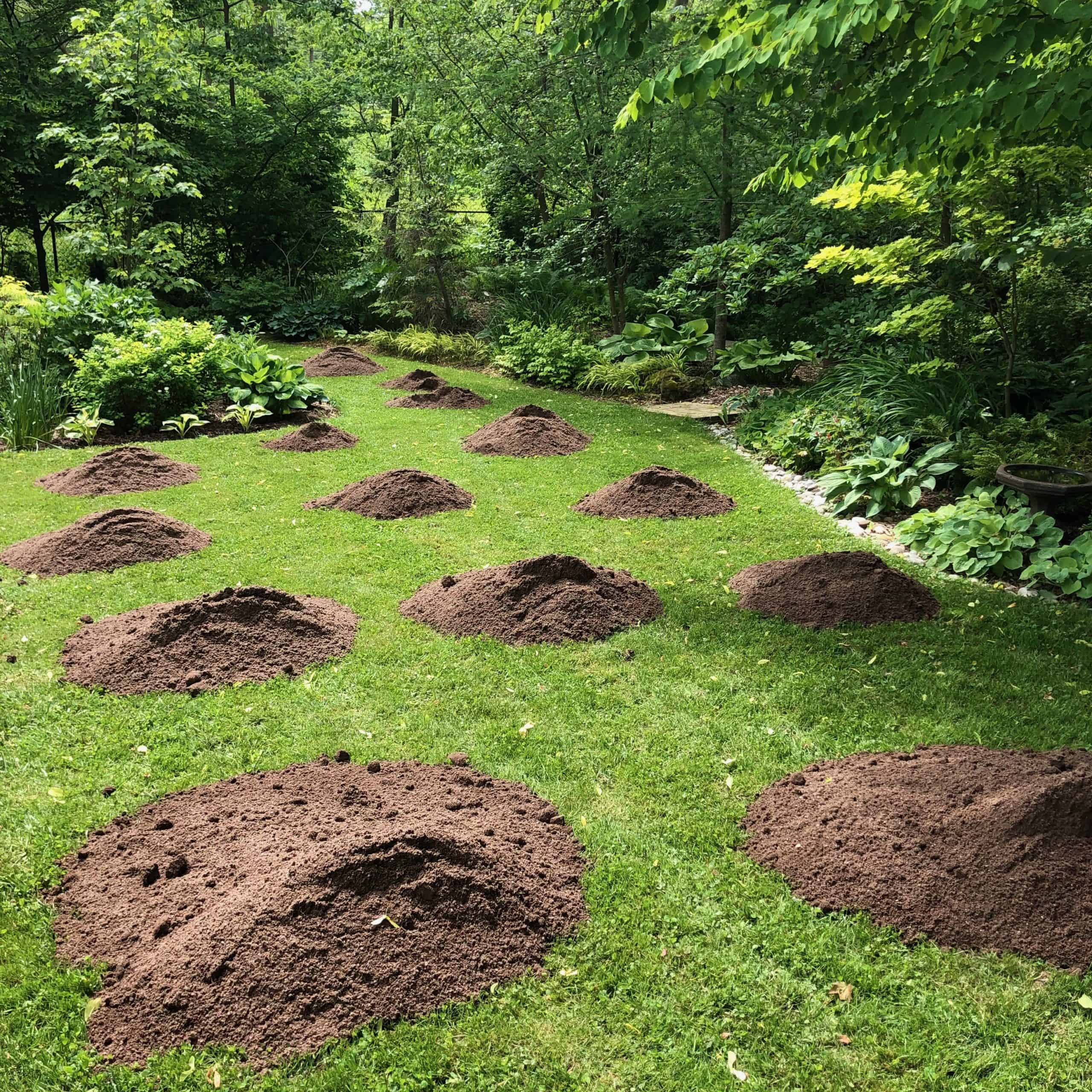 Spreading soil over the lawn.