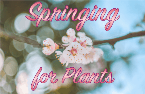 """Springing for Plants"" - online plant sale"