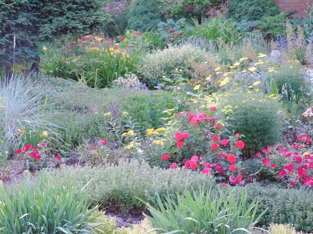 Going Grassless: Meadowscaping My Front Yard with Master Gardener Julianne Labreche